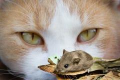 Occhi e mouse di gatto Fotografia Stock