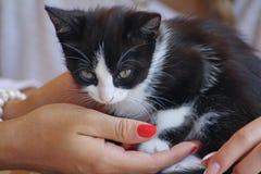 Occhi felini Fotografie Stock Libere da Diritti