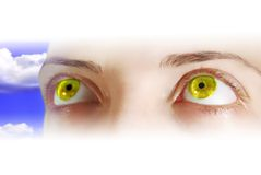 Occhi gialli Fotografia Stock