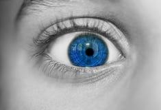 Occhi perspicaci di sguardo Fotografia Stock Libera da Diritti