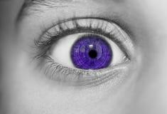 Occhi perspicaci di sguardo Immagine Stock