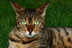 Occhi potenti Immagini Stock