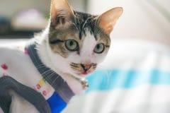 Occhi svegli di giallo del gatto Immagini Stock Libere da Diritti