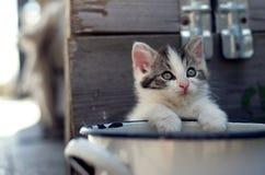 Occhi tristi dei gatti Fotografie Stock