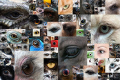 Occhi umani ed animali Fotografia Stock