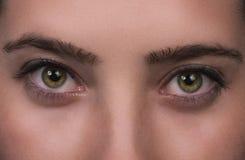 Occhi verdi di bella ragazza immagine stock
