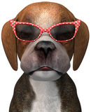 Occhiali da sole divertenti del cucciolo di cane isolati Fotografia Stock Libera da Diritti