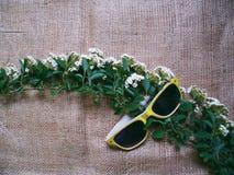 Occhiali da sole e un ramoscello dei fiori Immagini Stock Libere da Diritti