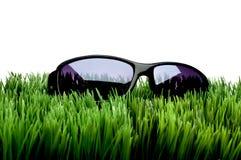 Occhiali da sole su erba contro bianco immagini stock libere da diritti