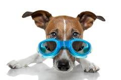 Occhiali di protezione del cane Fotografie Stock