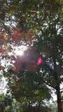 Occhiata di luce solare attraverso gli alberi fotografie stock