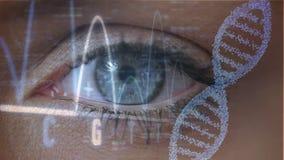 Occhio aperto e vicino illustrazione vettoriale