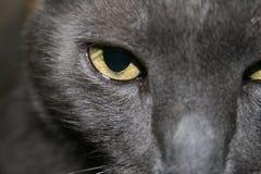 Occhio azzurro russo Immagini Stock Libere da Diritti