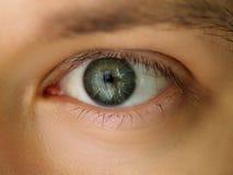 Occhio colorato verde smeraldo sinistro maschio immagini stock