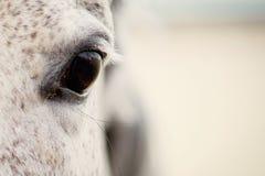 Occhio da un cavallo dettaglio Fotografia Stock