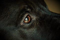 Occhio dei cani Immagine Stock Libera da Diritti