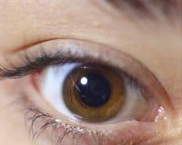 Occhio del Brown Immagini Stock Libere da Diritti