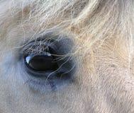 Occhio del cavallo Fotografia Stock Libera da Diritti