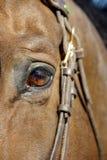 Occhio del cavallo immagini stock