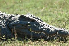 occhio del coccodrillo Fotografia Stock