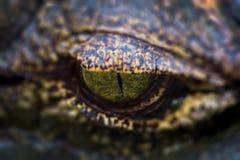 Occhio del coccodrillo (alligatore) Fotografie Stock