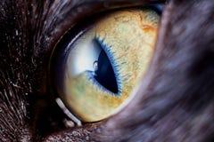 Occhio del gattino del primo piano Fotografia Stock Libera da Diritti
