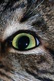 Occhio del gatto immagine stock
