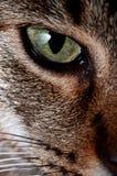 Occhio del gatto. Fotografia Stock
