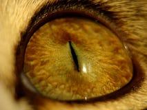 Occhio del gatto Immagini Stock Libere da Diritti