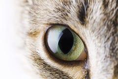Occhio del gatto Fotografie Stock