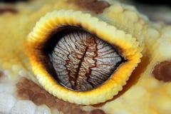 Occhio del gecko del leopardo immagine stock