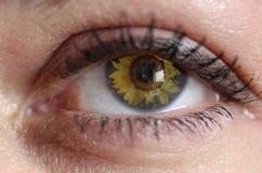 Occhio del girasole Fotografia Stock Libera da Diritti
