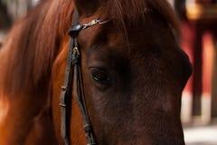 Occhio del primo piano del cavallo fotografie stock libere da diritti