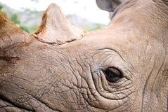 Occhio del rinoceronte Fotografia Stock Libera da Diritti