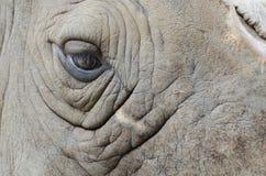 Occhio del rinoceronte immagini stock libere da diritti