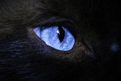Occhio del ` s del gatto Fotografia Stock