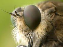 Occhio del ` s della libellula Fotografia Stock