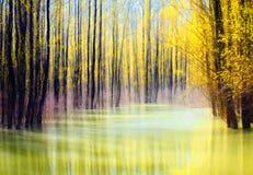Occhio dell'acqua della foresta Fotografia Stock Libera da Diritti