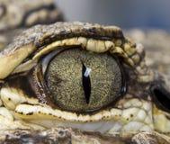 Occhio dell'alligatore Fotografie Stock