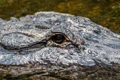 Occhio dell'alligatore, grande prerogativa nazionale di Cypress, Florida Fotografie Stock