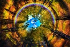 Occhio dell'arcobaleno della foresta Fotografie Stock