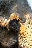 Occhio dell'elefante Fotografia Stock Libera da Diritti