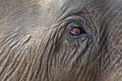 Occhio dell'elefante del primo piano. Fotografie Stock