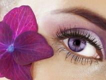 Occhio della donna Immagini Stock