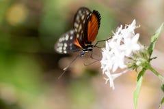 Occhio della farfalla Fotografie Stock