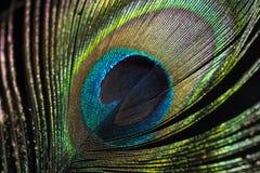 Occhio della piuma del pavone Fotografia Stock Libera da Diritti