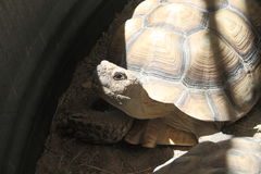 Occhio della tartaruga Fotografie Stock Libere da Diritti