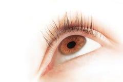Occhio di Brown di un cercare della giovane donna Fuoco sull'iride fotografia stock