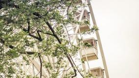Occhio di Budapest dell'attrazione di Budapest con una vista sotto da un albero fotografia stock