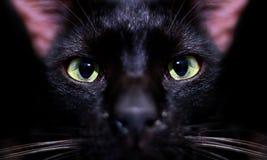 Occhio di gatti neri che fissa sopra il nero Fotografie Stock